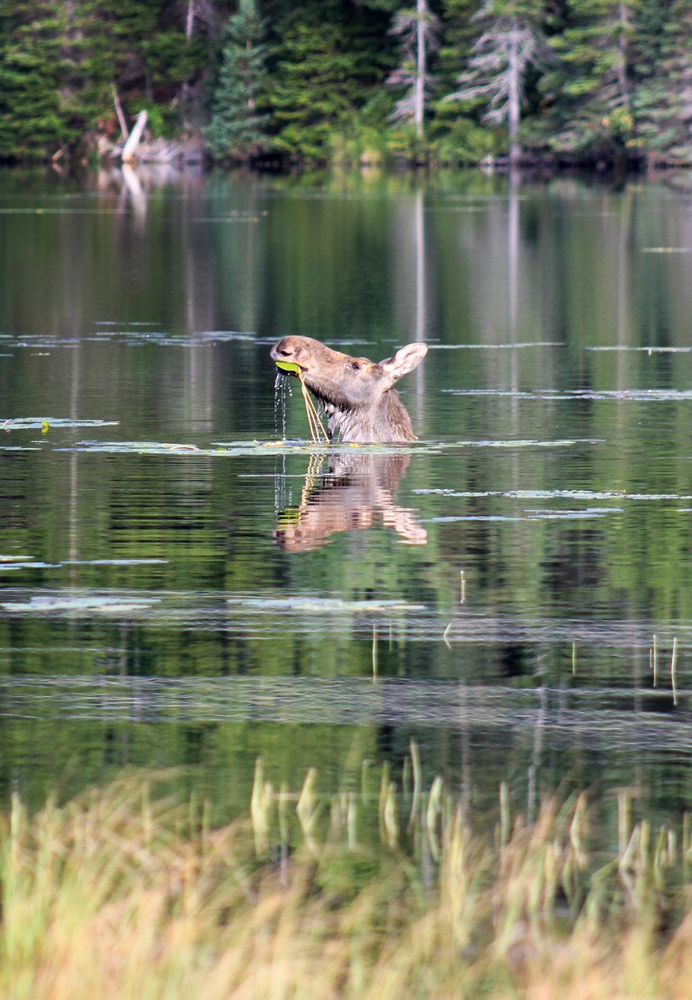 Water horse.jpg