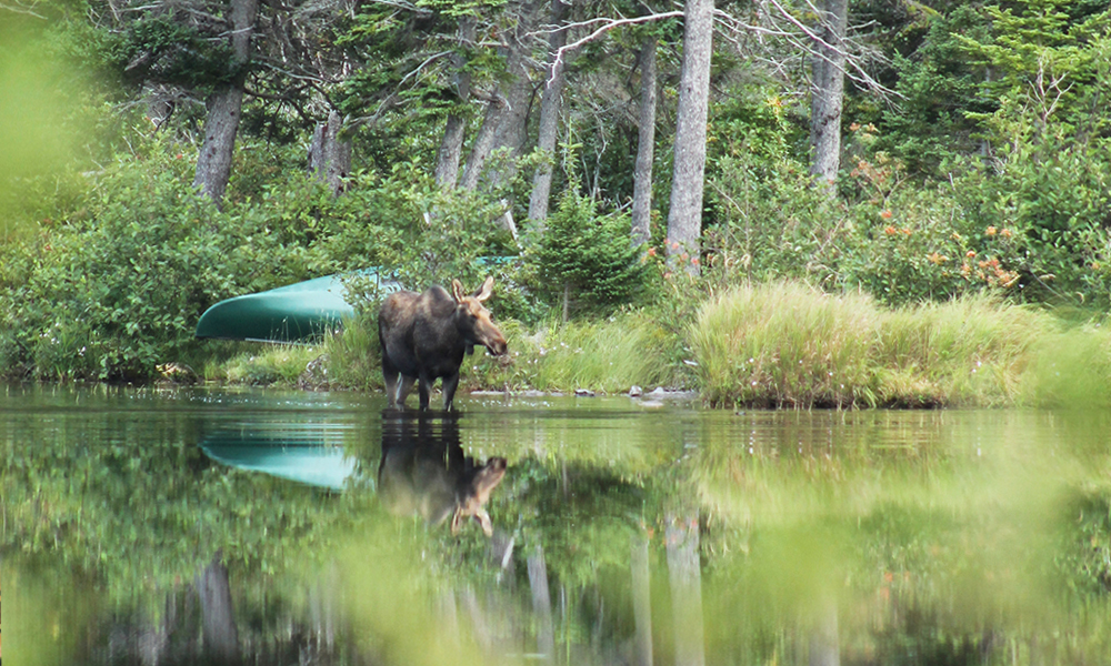 Moose Homepage.jpg