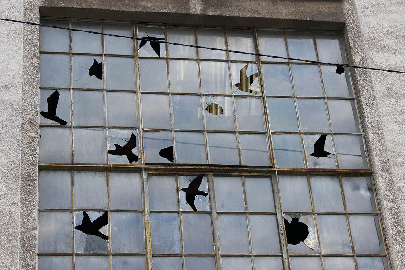 Pejac Appear Birds in cracked glass