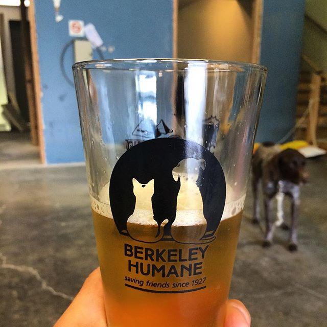 Appropriate glassware for a brewery in Berkeley. #berkeleyhumane #craftbeer #localbeer #freshbeer #eastbay #eastbaybeer #westberkeley #berkeleybeer #anvilbrewing #beer