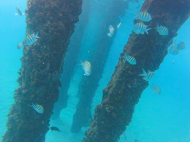 Under the pier of crash boat in aguadilla #beach #fish #ocean #pr #puertorico #scene #clean #clear #wow #happy