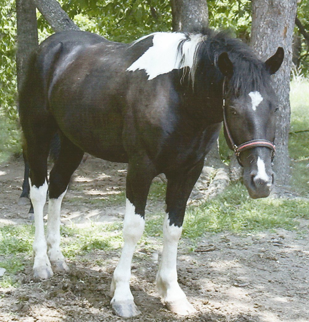"""Tag""   Paint/Percheron"