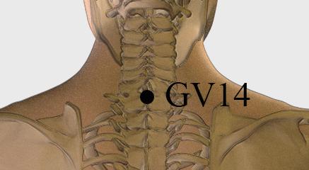 GV14b
