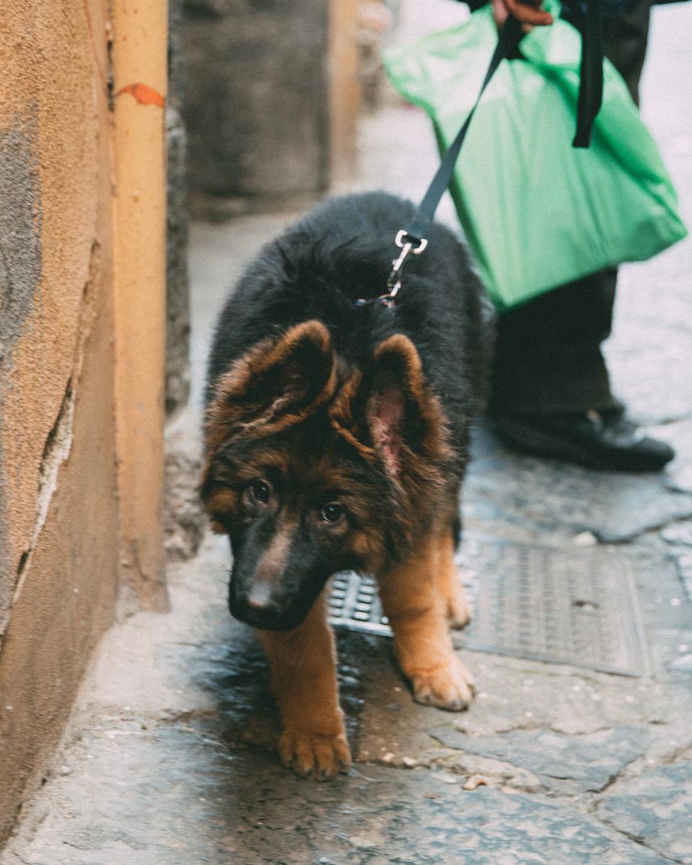 doggiw-06915.jpg