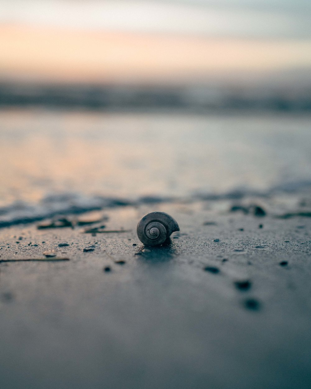 A cute little shell found along the sea shore at Ben Davies sunset spot.