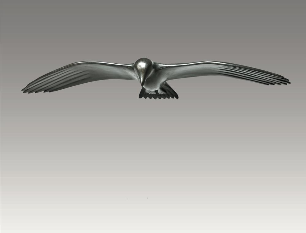 Gull Gliding