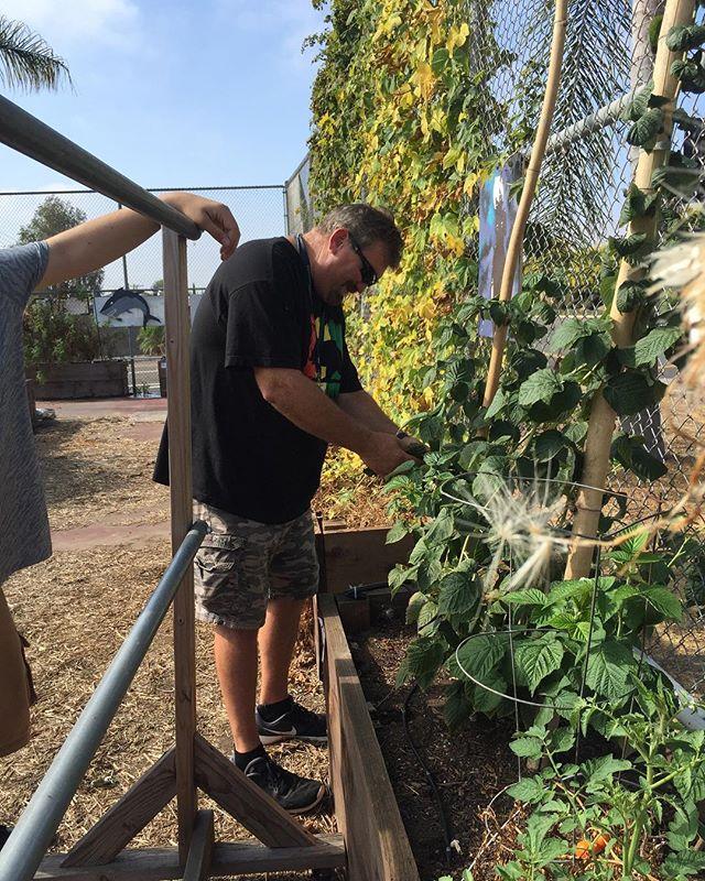 #abraxasgarden #harvesting