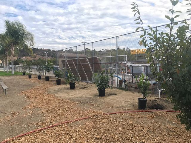 New trees for the abraxas orchard 🌳 #abraxasgarden