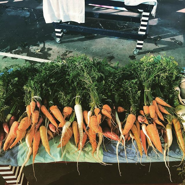 Carrots and cabbage harvest! #abraxasgarden