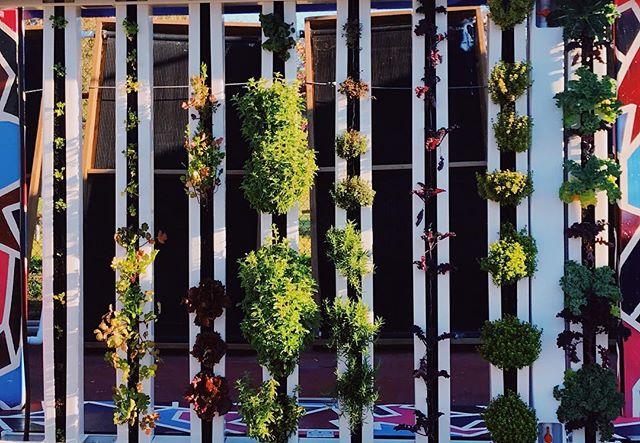 #abraxasgarden solar powered vertical herb garden built by students