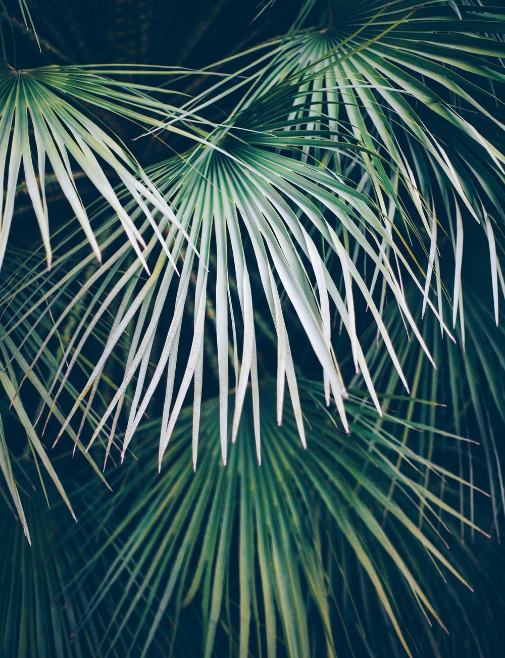 hawaiin palms
