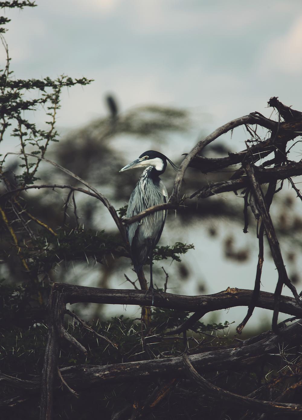 Wildlife03.jpg