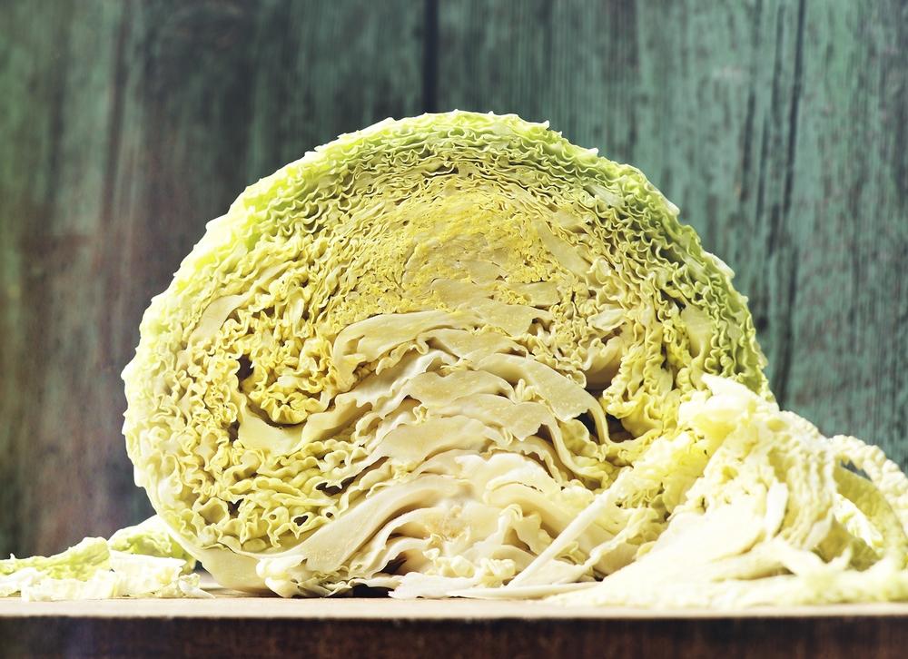 cabbage portrait fuze reps toronto