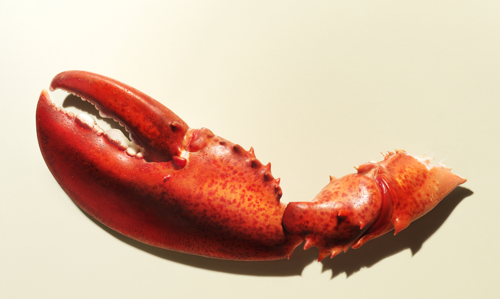 Lobster Claw earl's restaurant ad