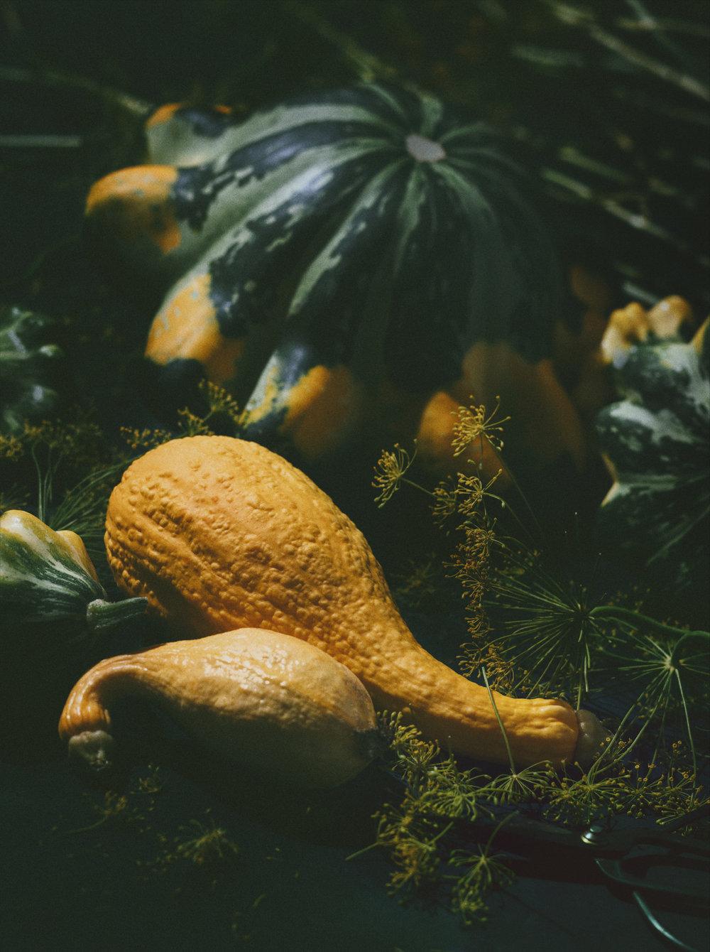 autumn squash local ontario still life food photos