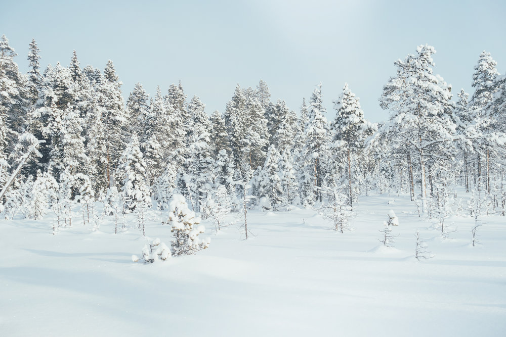 winter landscape travel