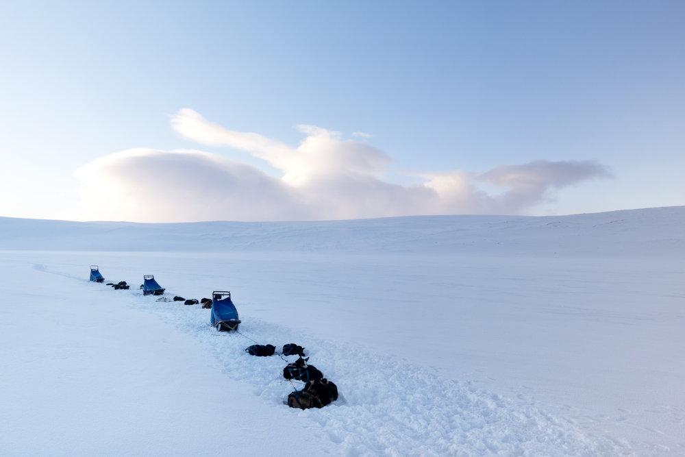mushing scandinavia snow winter