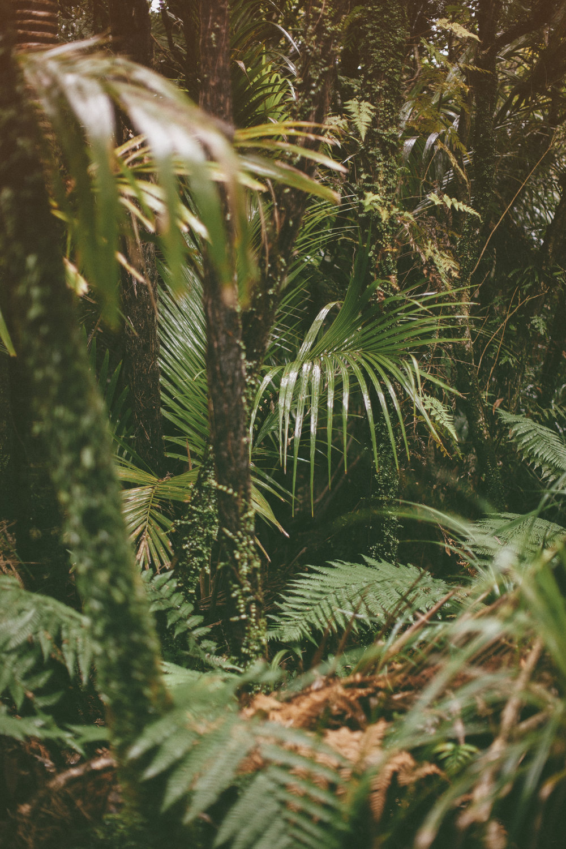 hawaii palms forrest folliage travel