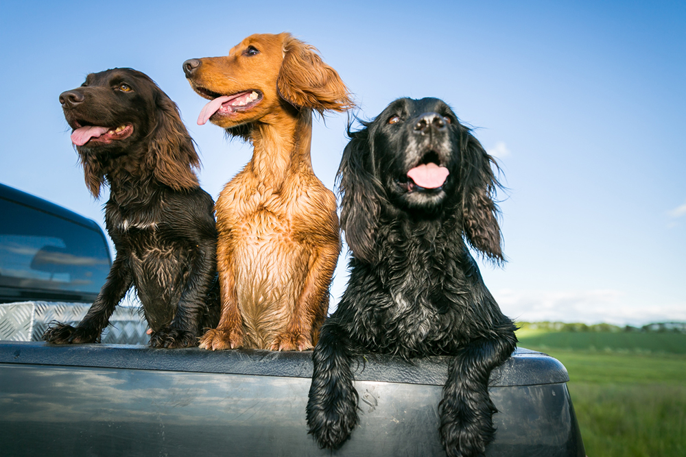 3_dogs.jpg