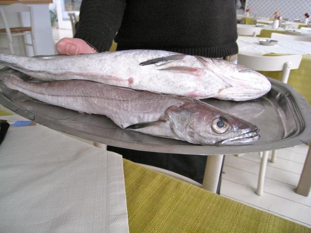 Fresh Cod, Before