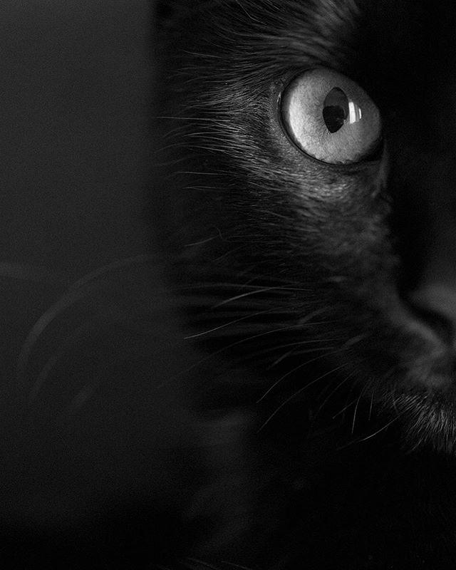 Classic . . . . #toronto #kitty #love #xoxo #torontophotographer #spca #montreal #baby #catsofinstagram