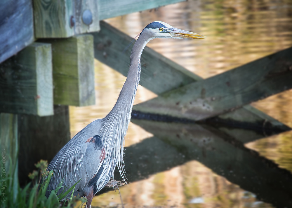 010 great-blue-heron-bridge-BB.jpg