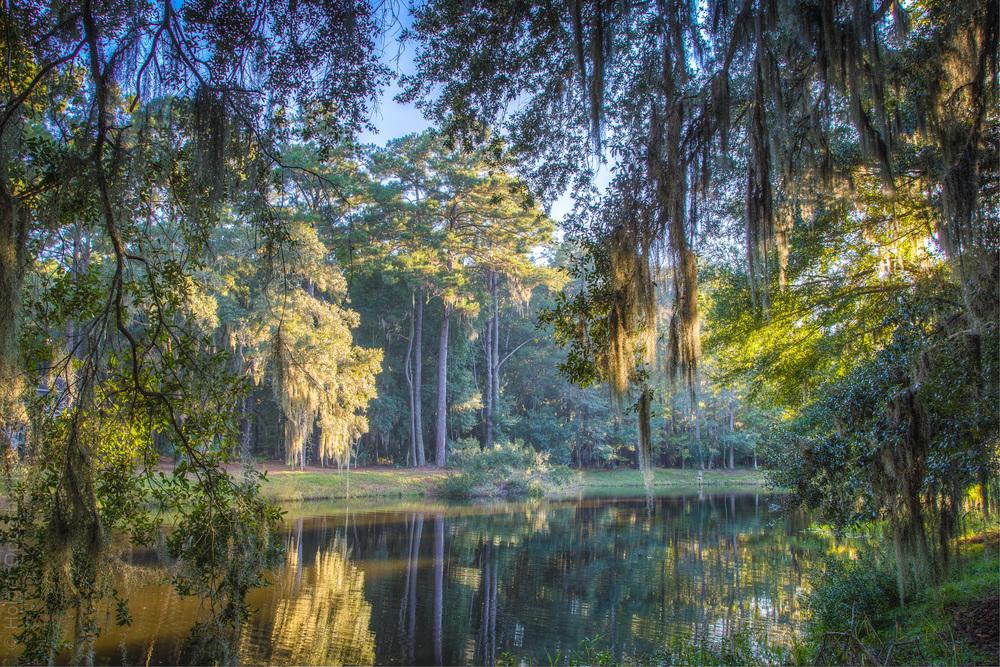 pond-view.jpg