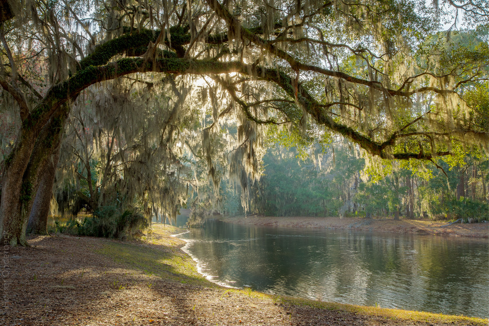 pond-PS1.jpg