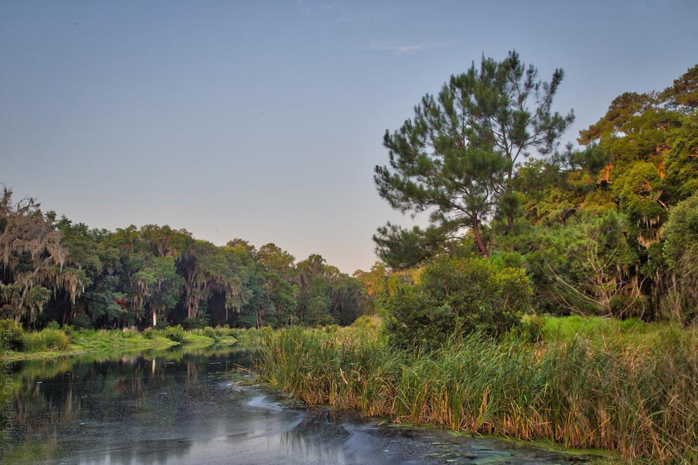 pond-tree.jpg