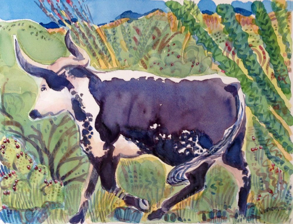 Blue Steer