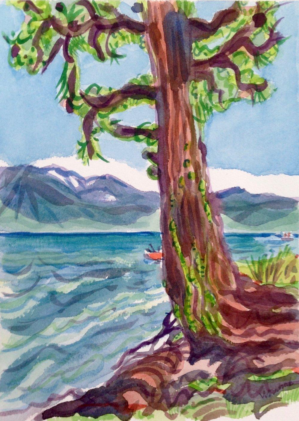 Cedar, Lake Tahoe