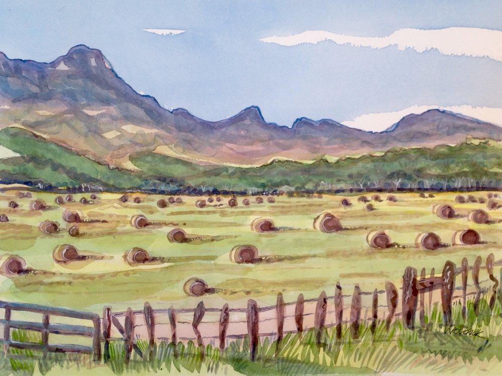 Hay Field, Rio Rico