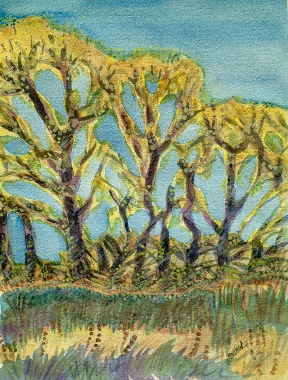 Cottonwoods, Santa Cruz River