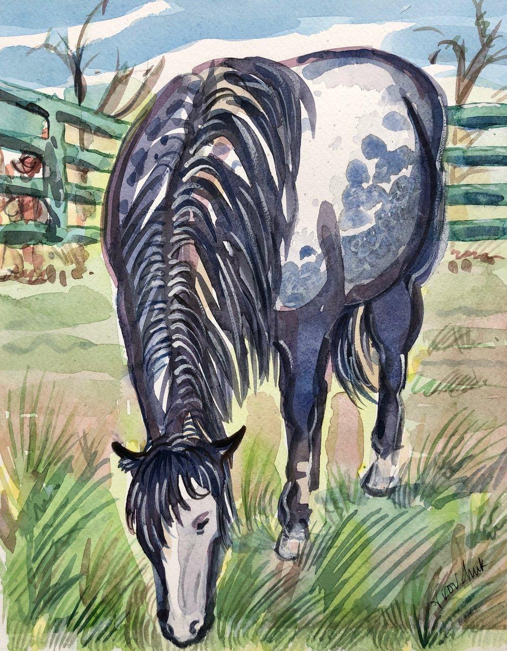 Smokey, US Border Patrol Horse