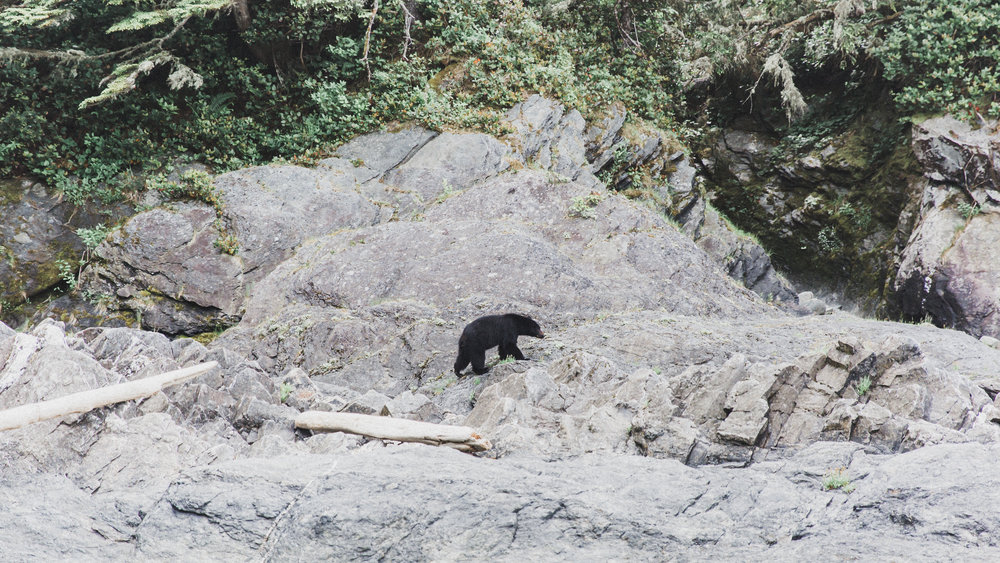 I was freaking out... Tyler was in heaven. This is one of 4 bears we saw throughout our trip, I only managed to get a photo of this guy.