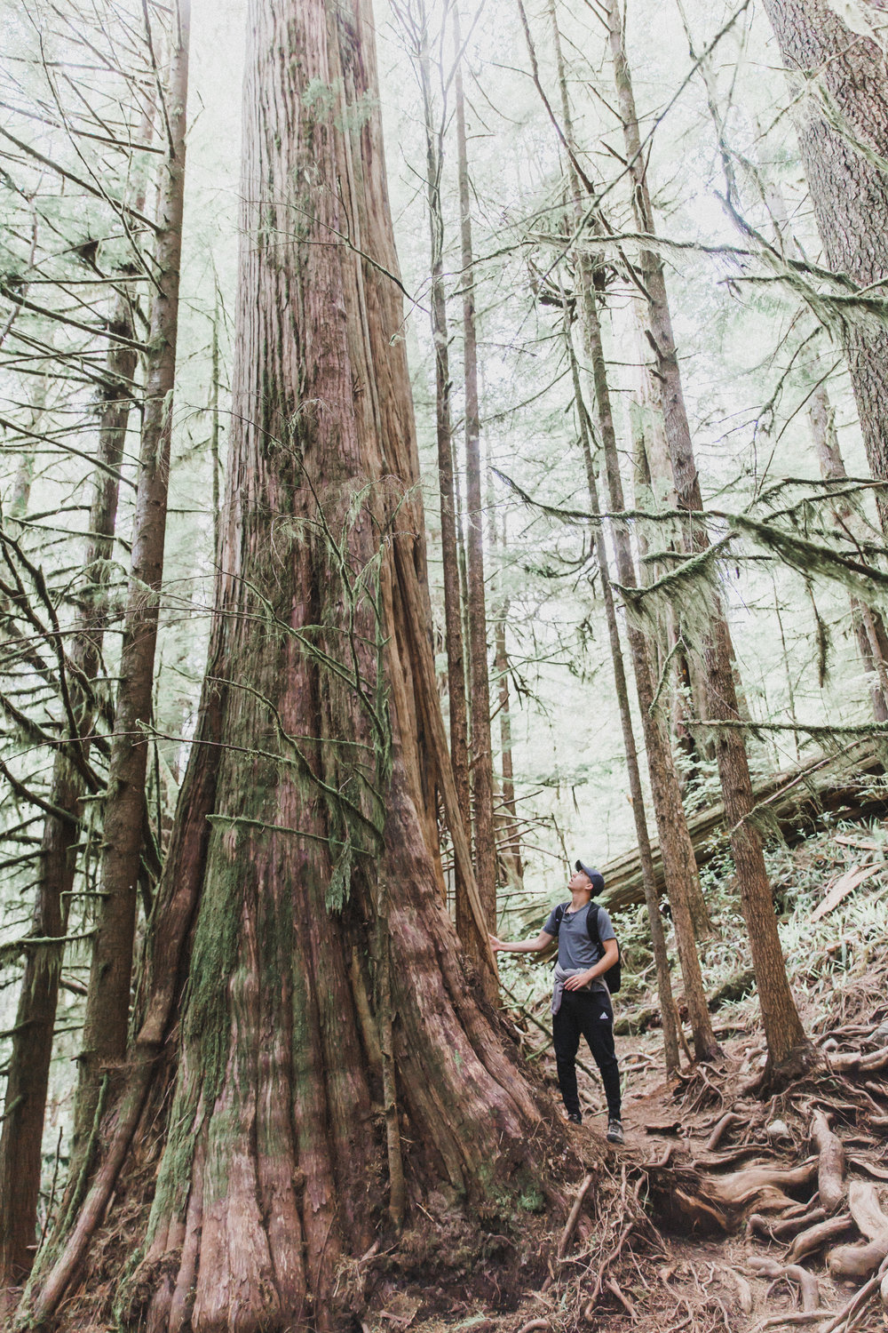 The trees in British Columbia are INSANE. Honestly the photos don't do them justice.