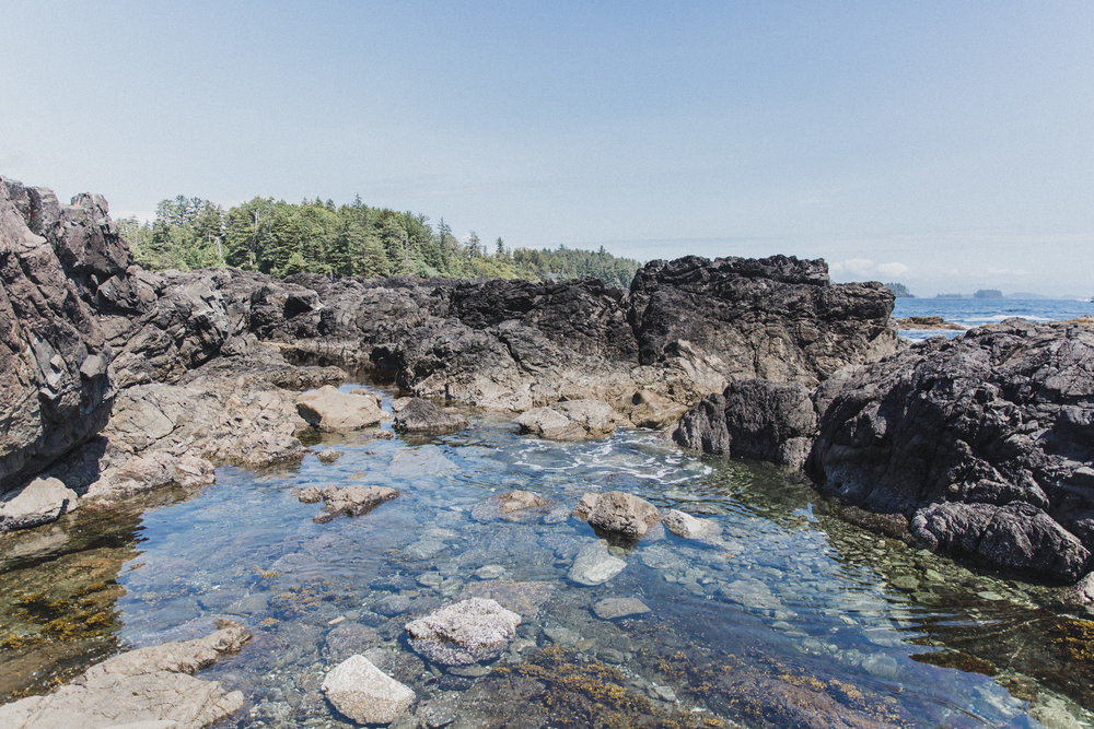 We spent hours exploring tide pools for wildlife - and were never disappointed.