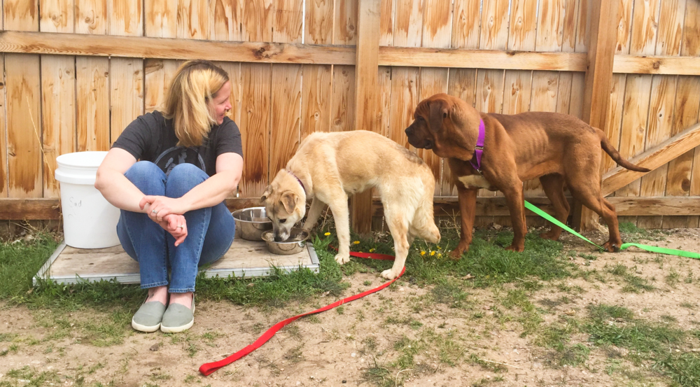 Black Dog Animal Rescue's Director of Operations, Emilee Intlekofer, helps socialize the rescued dogs by observing them in a calming manner.