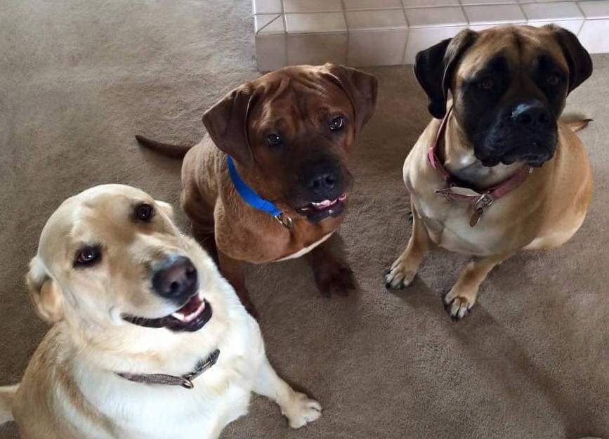 Norman (center) and his new adopted canine siblings.