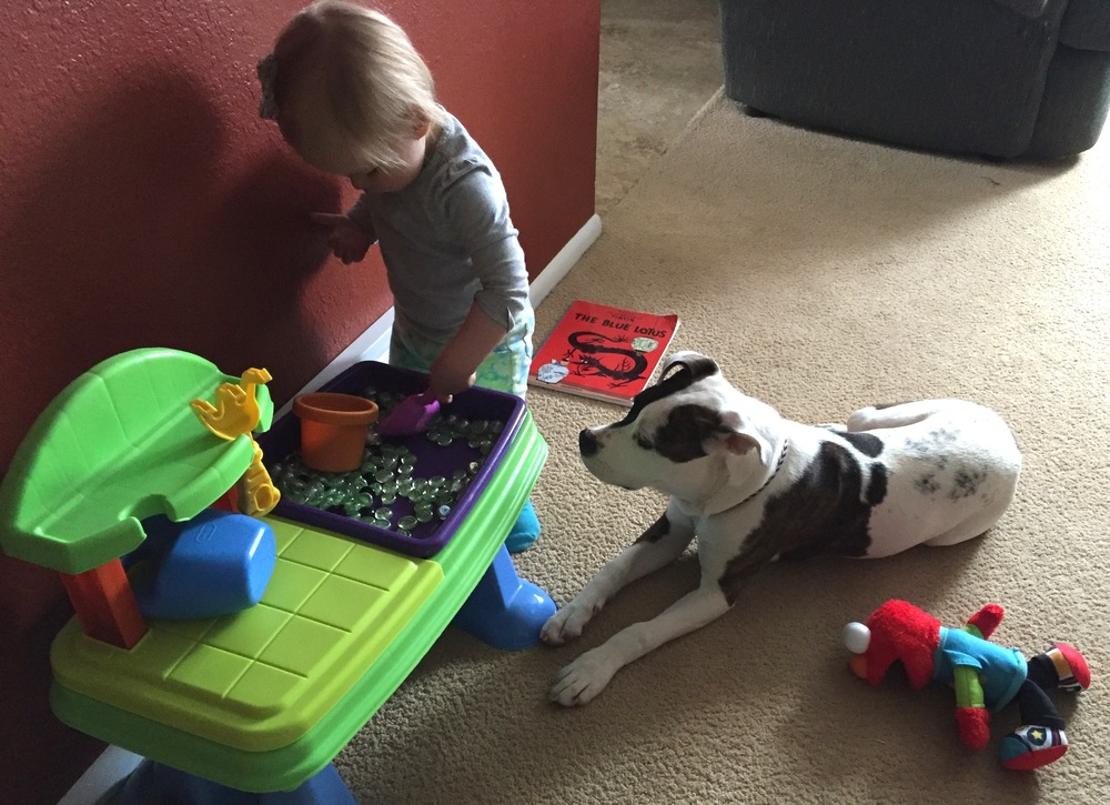 "Mia makes a great companion for 2 year old Ivy.  Note: For more information about the history and most current knowledge of the dogs commonly called pit bulls, check out ""Pit Bull: The Battle over an American Icon"" by Brownwen Dickey."