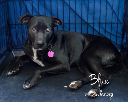 Blue is available for adoption, visit him by clicking on the ADOPT button at the top of our website.