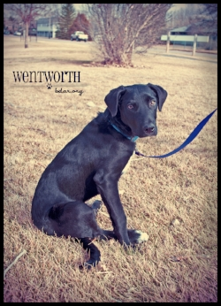 Wenworth poses for an adoption photo - though he isn't available yet.