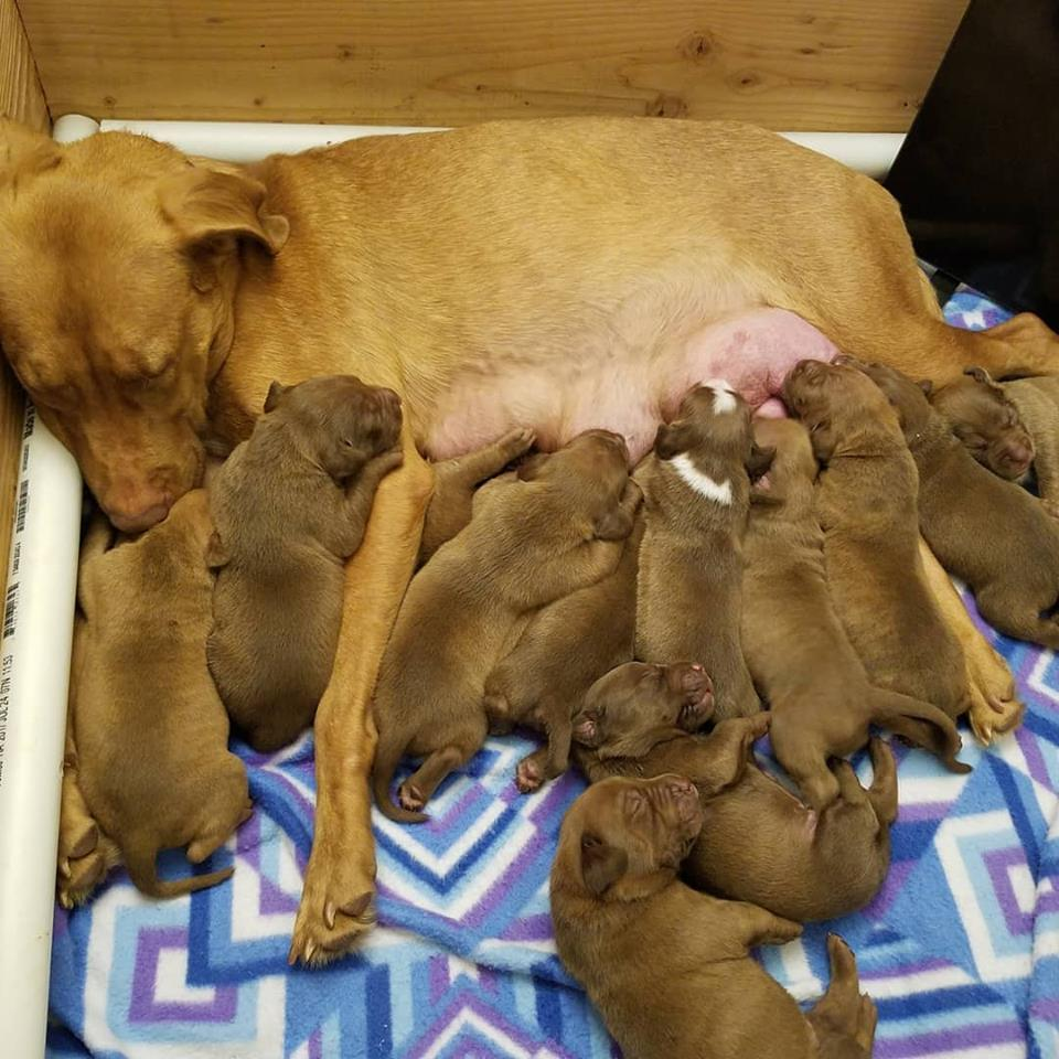 Zoe and her litter