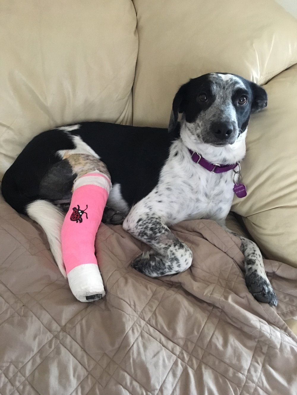 Isabelle post-surgery