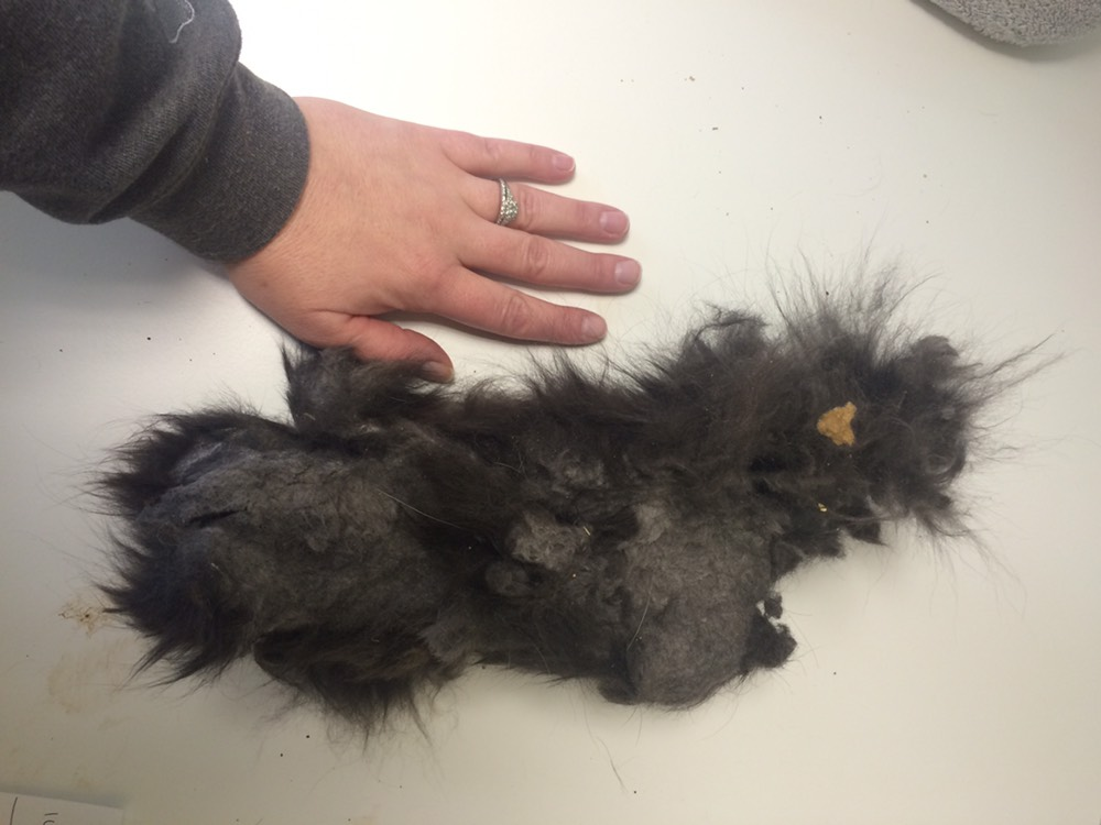 The mat of fur that came off of Emilio