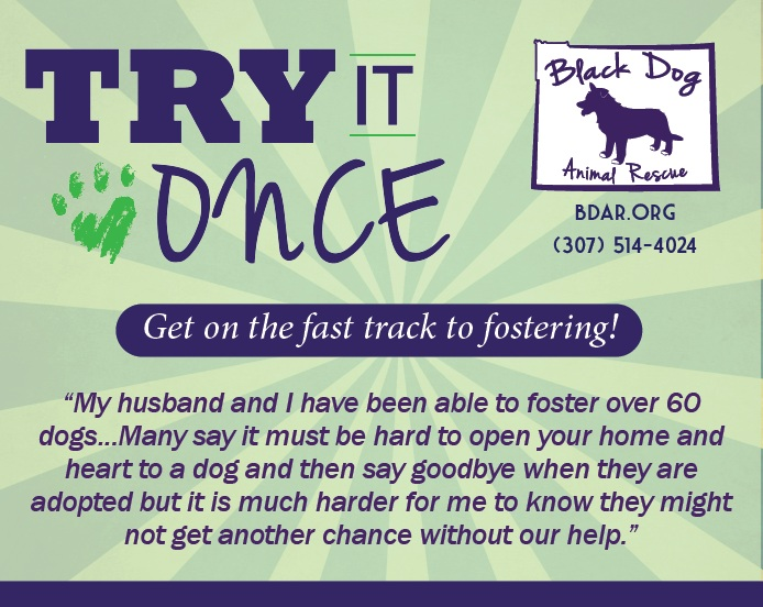 "Get on the fast track to fostering! Do you want to see if fostering is right for you before filling out the application and attending orientation? Join the ""Try It Once"" program!"