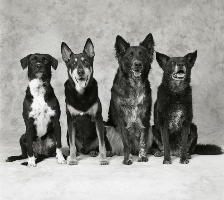 4-dogs-copy.jpg