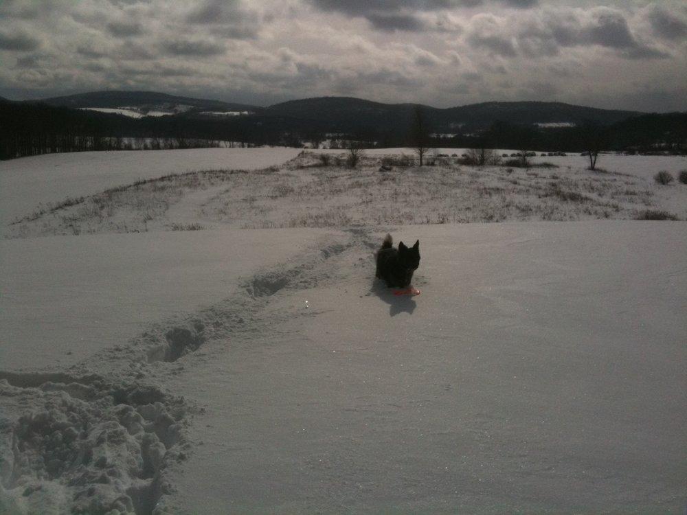 Fred snow 2.jpg