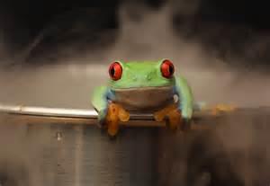 frog on edge of pot.jpg