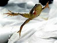 frog jumping out of pot.jpg